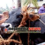 Udupi Cattle thieves