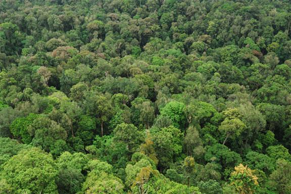 Four-lane highway through Byrapura-Holegandi will damage forest areas