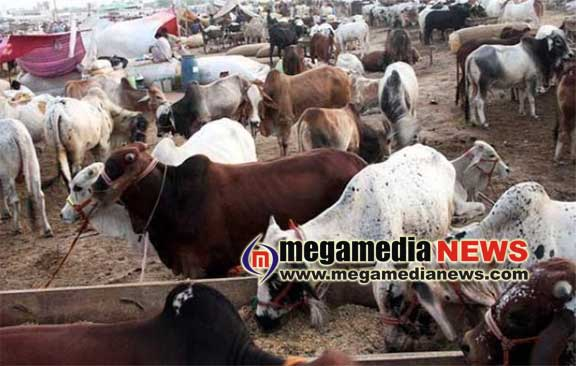 Police seize vehicle for illegally transporting cattle