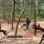 monkey death