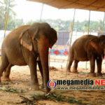 prabhath Circus