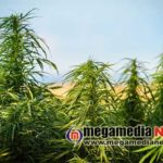 Youth arrested for growing cannabis near Thokkottu