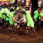 'Jallikattu' kicks off amid fanfare in Tamil Nadu, 62 men injured